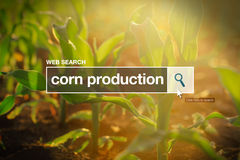 Corn production in internet browser search box Stock Photography