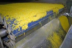 Corn production Stock Image