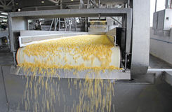 Corn production Royalty Free Stock Photo