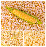 Corn products. Photo corn products, tasty corn products, ear of corn, background of popcorn, ripe corn, corn meal, a variety of products made from corn Stock Image