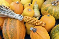 Corn and pumpkin background Stock Photos