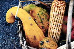 Corn and pumpkin basket Stock Images