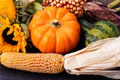 Corn and pumpkin. Close up corn dried arrangement Royalty Free Stock Image