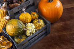 Corn and pumpkin Stock Images