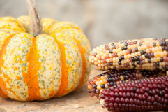 Corn with pumpkin Royalty Free Stock Image