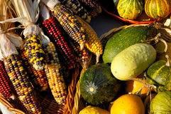 Corn and Pumpkins Royalty Free Stock Photos