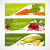 Corn radish carrot banners Royalty Free Stock Image