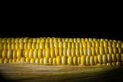 Corn ready for testing in laboratory Royalty Free Stock Photo