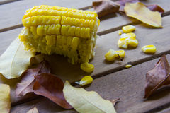 Corn residue from eating. On the wooden floor Royalty Free Stock Image