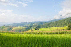 Corn and rice field terrace and shack with mountain background Stock Photos