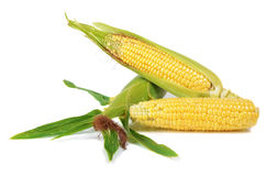 Corn ripe and sweet Royalty Free Stock Photography