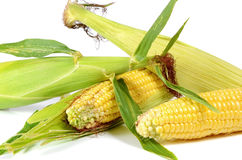 Corn ripe and sweet Stock Image