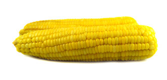 Corn ripe Royalty Free Stock Images