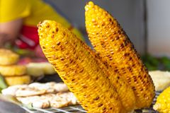 Corn roasted on charcoal. Corn roasted on charcoal in Thailand Royalty Free Stock Photo