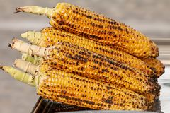 Corn, maize, Zea mays. Corn roasted on fire, grilled maize, Zea mays Royalty Free Stock Images