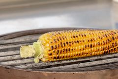 Corn, maize, Zea mays. Corn roasted on fire, grilled maize, Zea mays Royalty Free Stock Photo