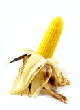 Corn roasted . Corn roasted thai style isolate Royalty Free Stock Photos