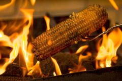 Corn roasting barbecue on coal fire Stock Images