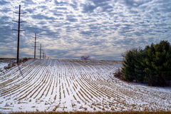 Corn rows, power lines, winter Stock Image