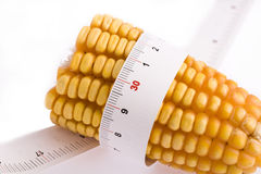 Corn and ruler Stock Image
