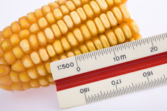 Corn and ruler Stock Photography