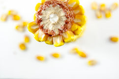 Corn's woody ring and corn grains. On white Royalty Free Stock Image