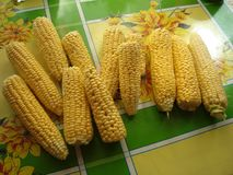 Corn Sakharnaya, also mais lat. Zéa máys - an annual herbaceous cultivated plant, the only cultural representative of the genus royalty free stock photos