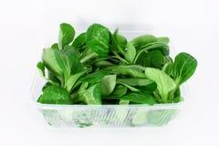Corn salad Stock Images