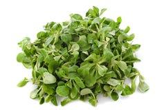 Corn salad Royalty Free Stock Photo