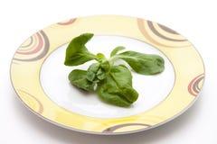 Corn salad on ceramic plate Stock Photo