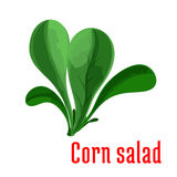 Corn salad dark green leaves icon, cartoon style Royalty Free Stock Photo