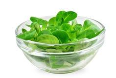 Corn salad leaf vegetable, lamb`s lettuce isolated on white. Valerianella locusta royalty free stock photo