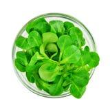 Corn salad leaf vegetable, lamb`s lettuce isolated on white. Valerianella locusta stock photos