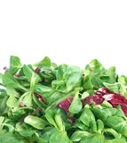 Corn salad and radicchio Stock Photo