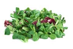 Corn salad and radicchio Stock Image