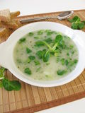Corn salad soup Stock Images