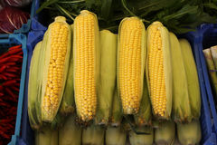 Corn for sale Stock Image