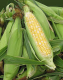 Corn for sale at farmers' market Royalty Free Stock Image