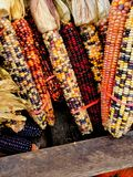 Corn for sale Stock Photography