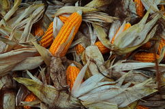 Corn for Sale. royalty free stock photo