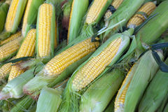 Corn for sale at market Stock Photo