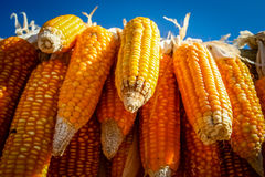 Corn on sale Royalty Free Stock Image