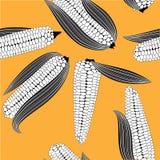 Corn seamless food vector background  cob plant. Stock Photo
