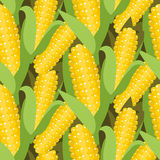 Corn seamless pattern vector illustration. Maize ear or cob. Corn seamless pattern vector illustration. Maize ear or cob harvest. Yellow sweetcorn and seeds Royalty Free Stock Photography