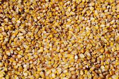 Corn seed Royalty Free Stock Photography