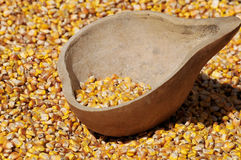 Corn seed royalty free stock images