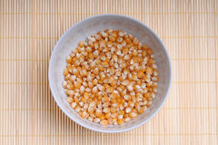 Corn seed Stock Image