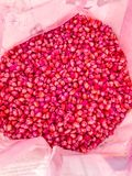 Corn seed chemically treated. For seeding Royalty Free Stock Photo