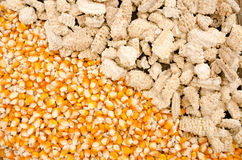 Corn seed with cob. Dried corn and cob are placed together Royalty Free Stock Images