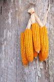 Corn seed Stock Photo